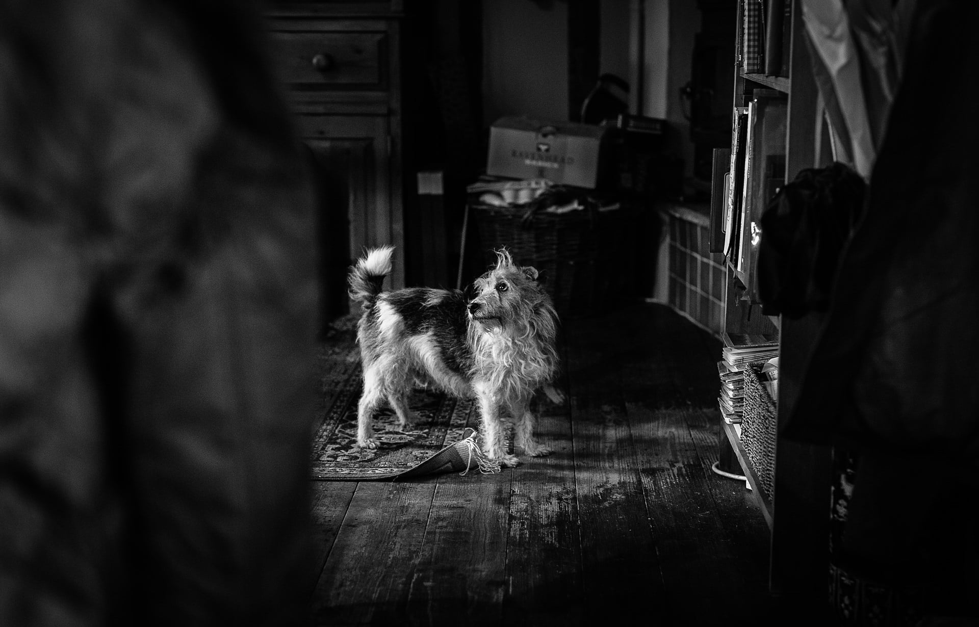 Sarah's pet dog captured by Shropshire Documentary Wedding Photographer pbartworks