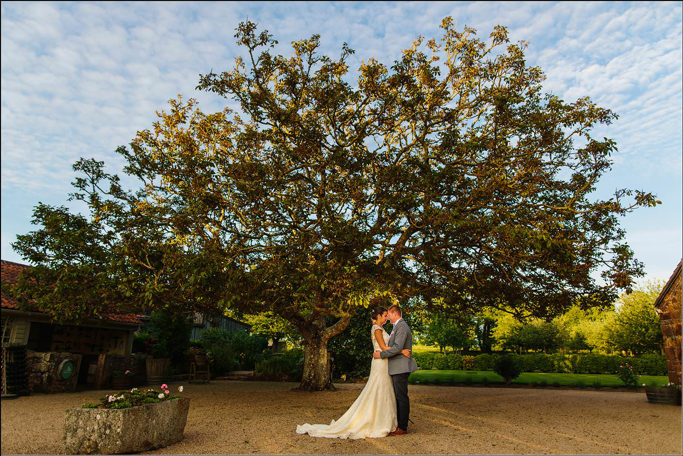 bride and groom by a tree on Jersey captured by Shropshire destination photographer