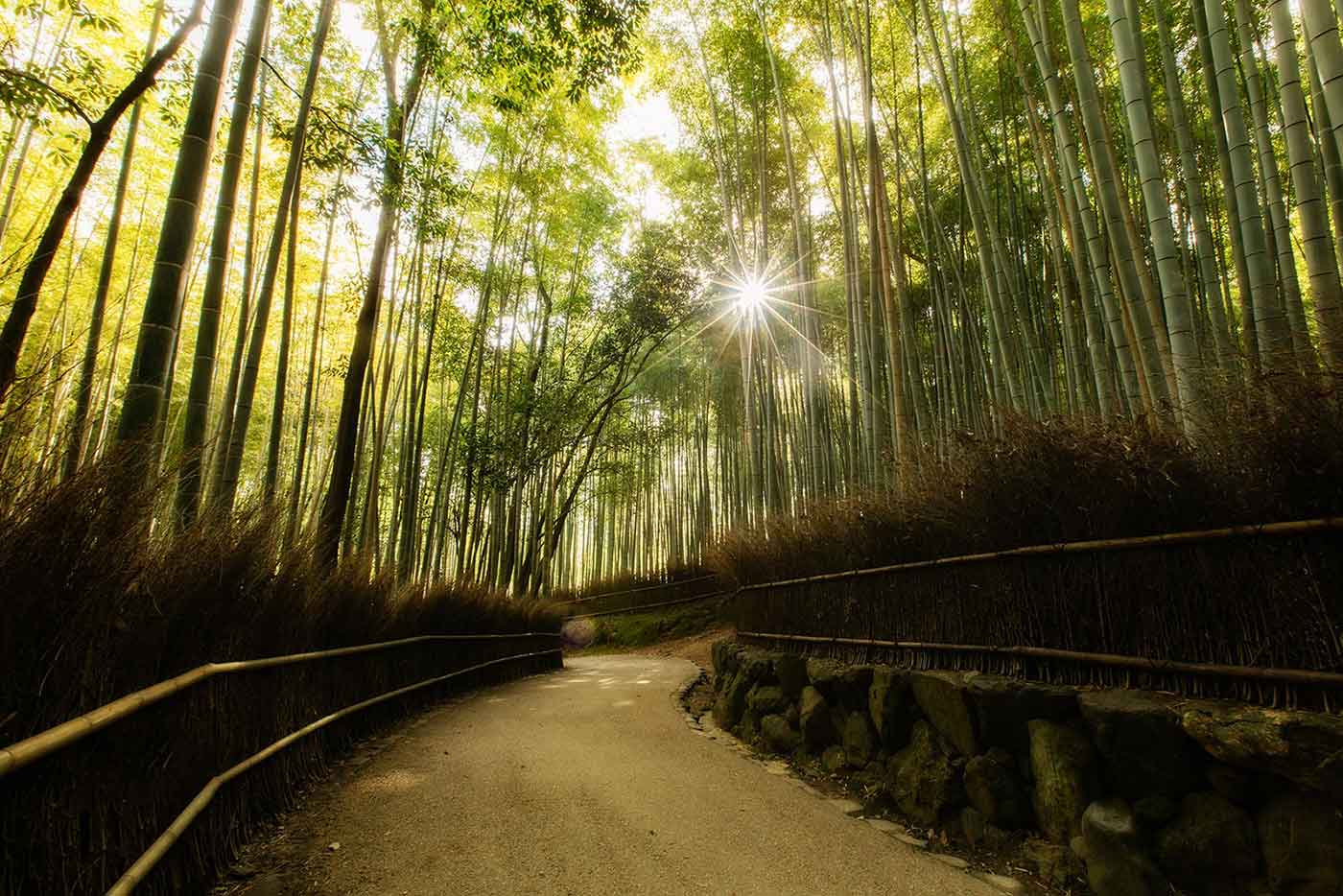 the stunning japanese forests of bamboo