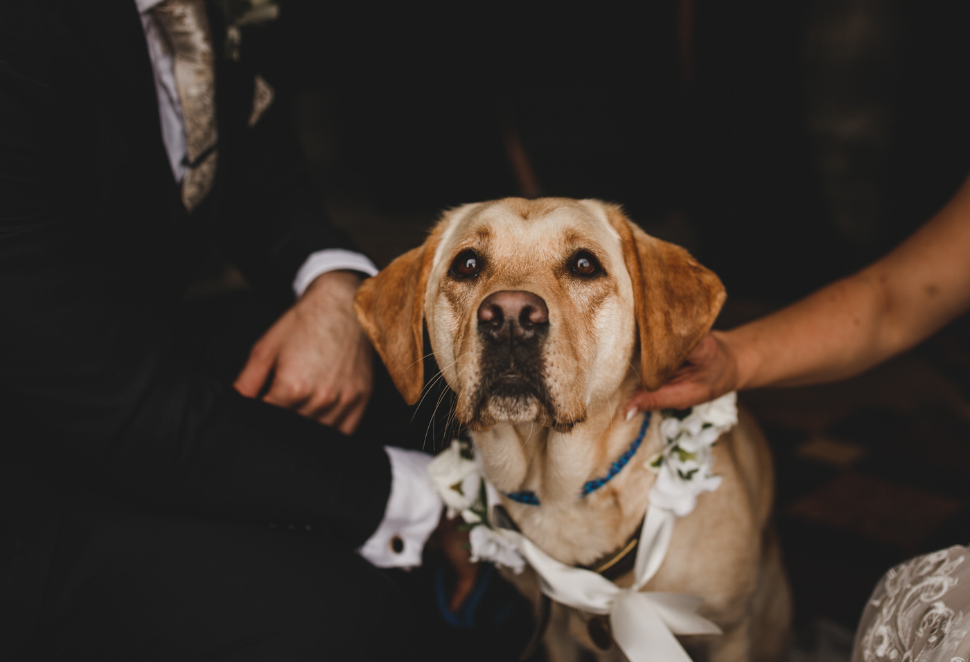 The newlyweds great their pet Labrador at the Church