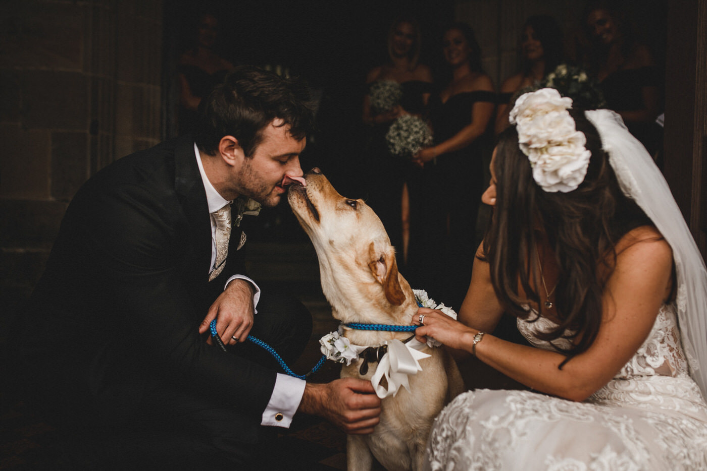 the groom gets a kiss off his pet Labrador as the bride looks on